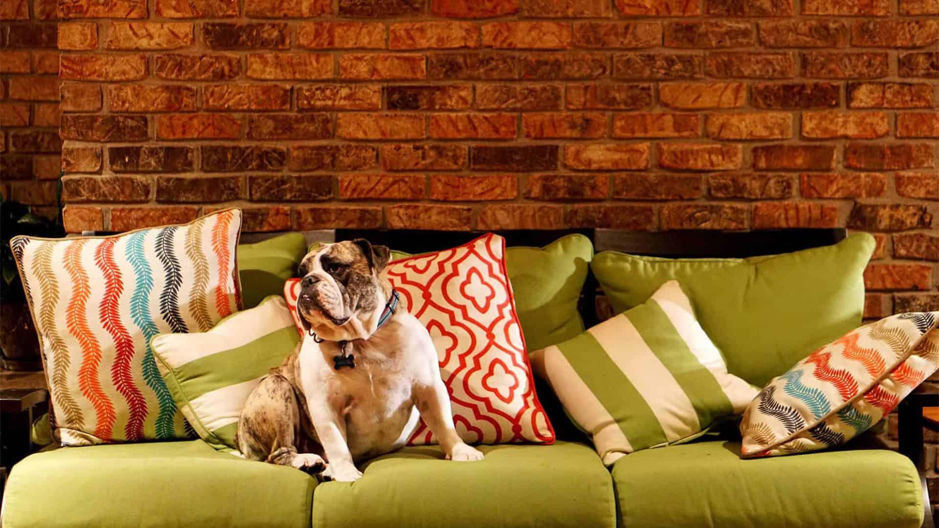 DogsTV – Online Hundetraining
