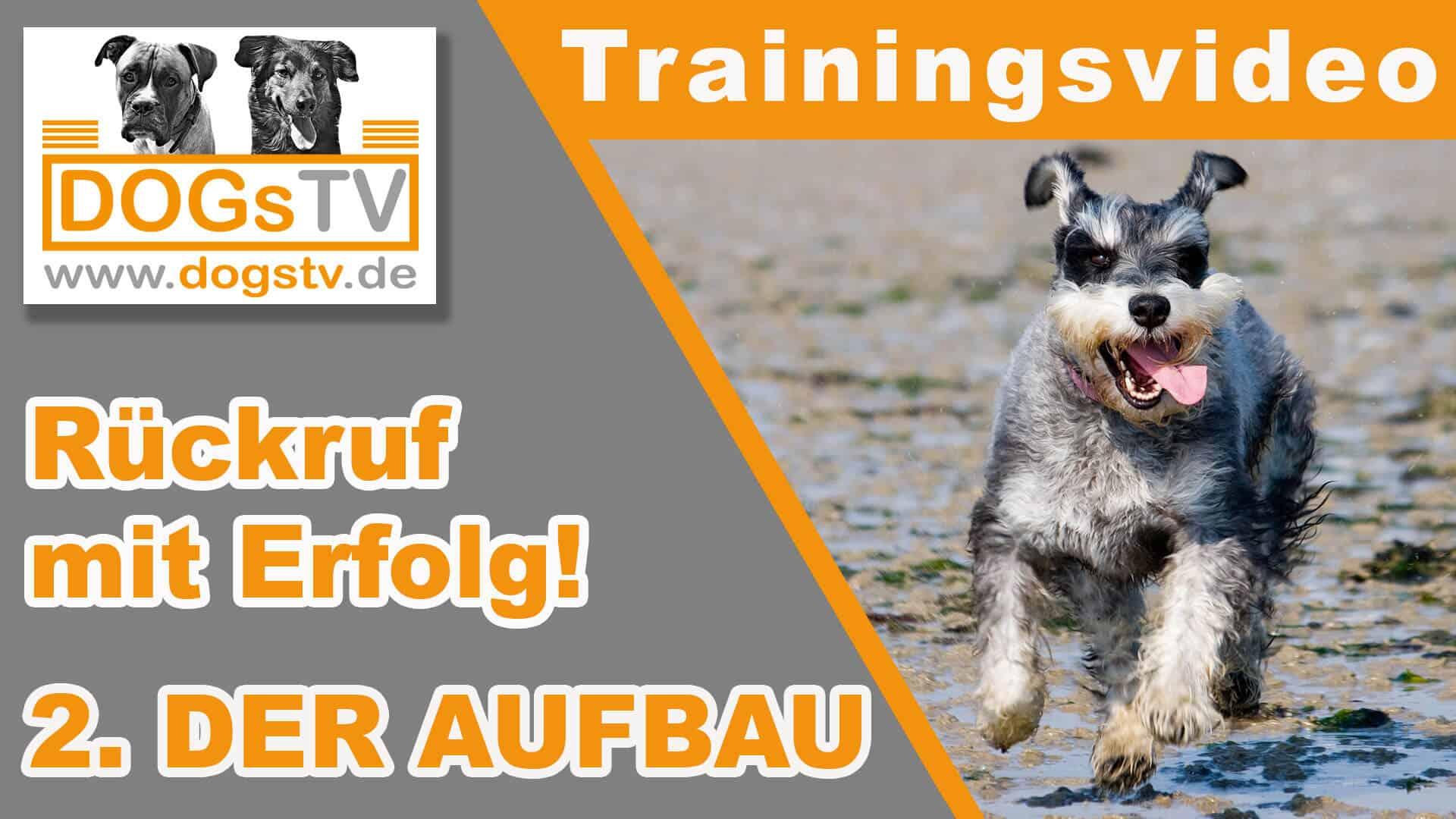 rückruftraining-hund