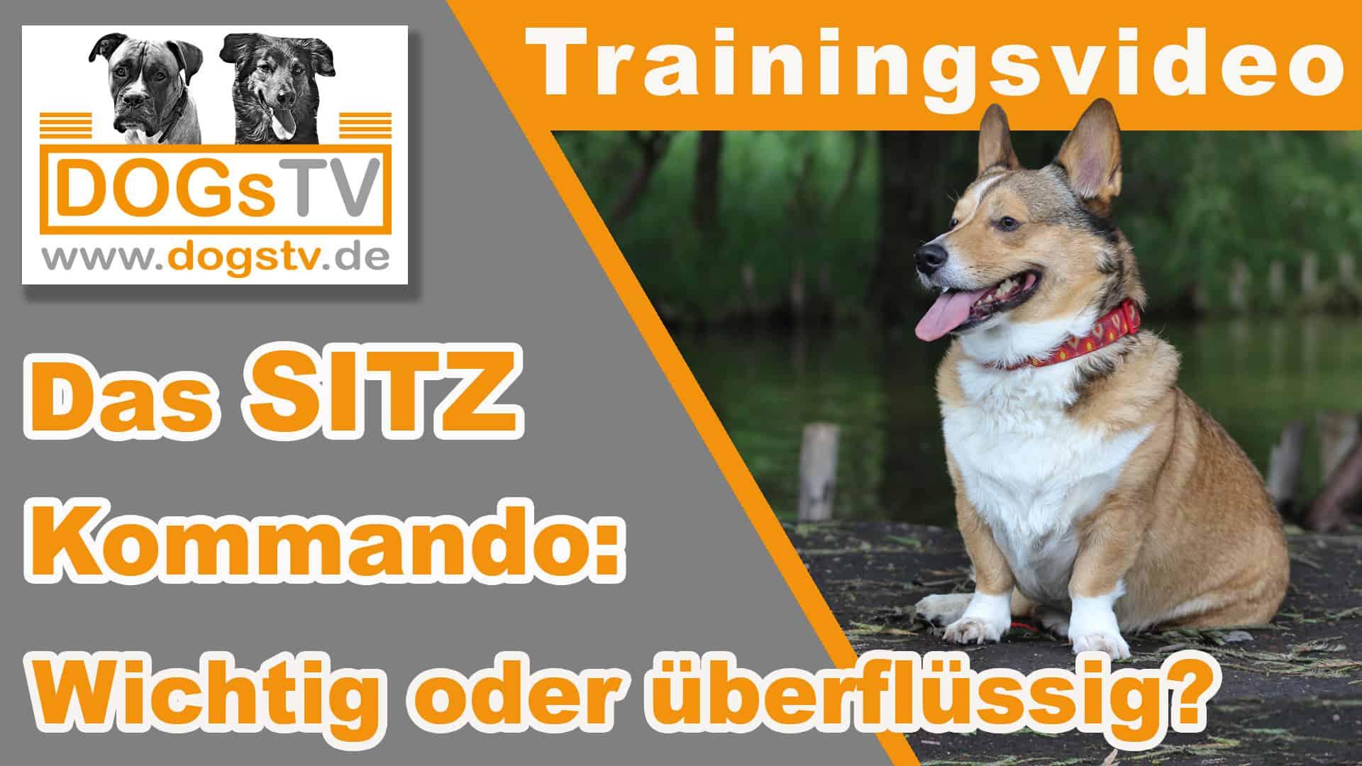 kommando sitz für hunde