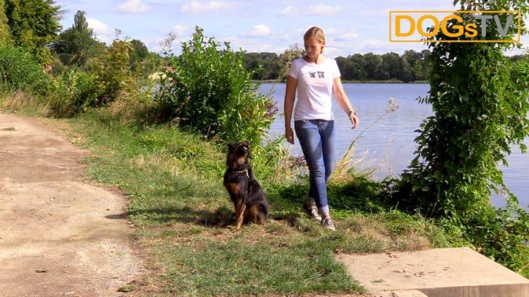 Hund Sitz beibringen Auflösungssignal