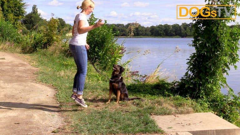 Hund Sitz beibringen stehend