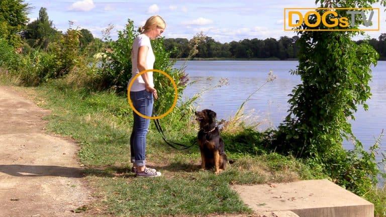 Hund Sitz beibringen Hocke