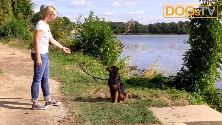 Hund Sitz beibringen Belohnung