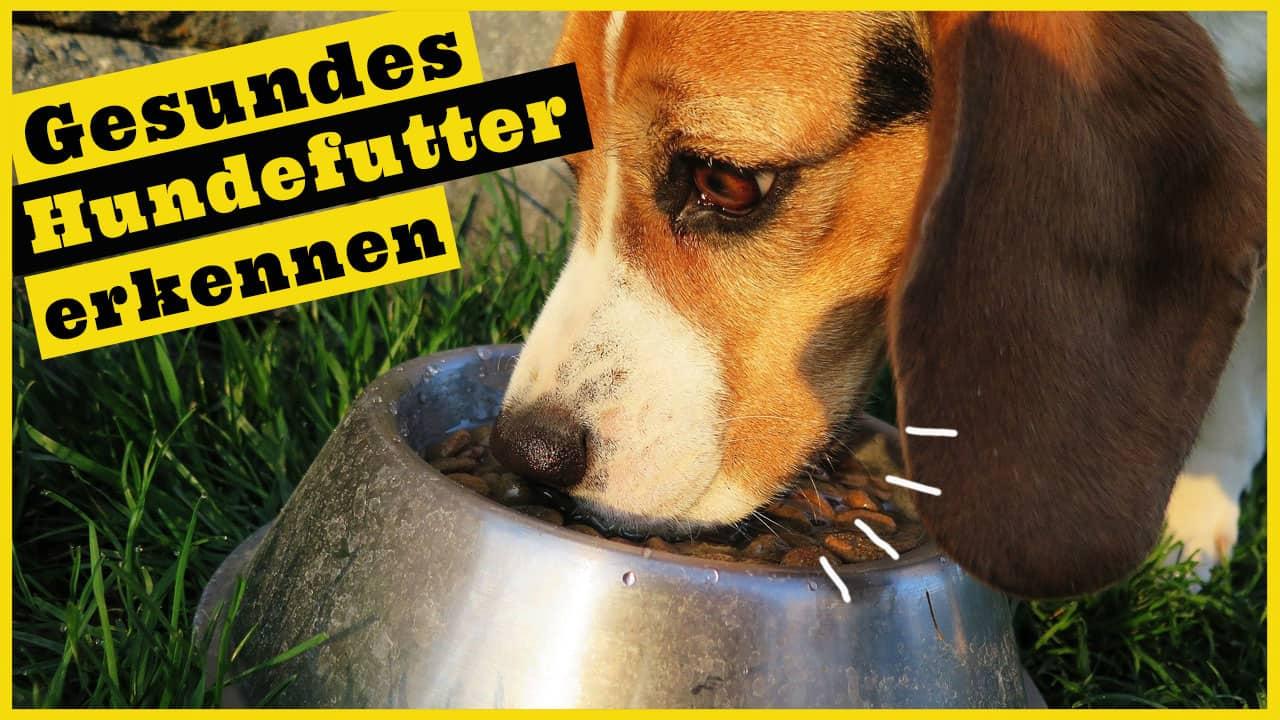 trockenfutter hund gesundes hundefutter erkennen dogstv