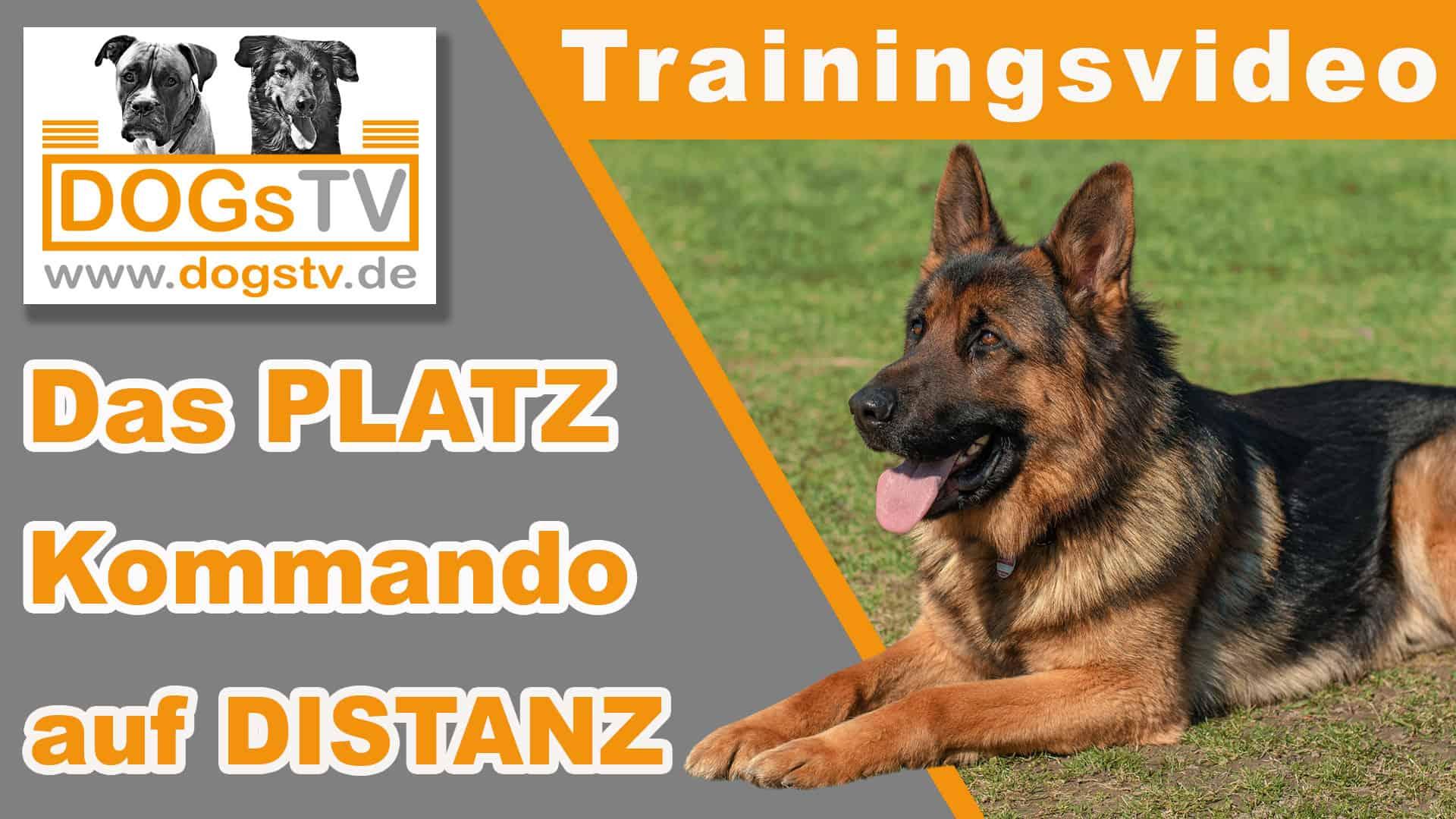 platz auf distanz hund beibringen dogstv