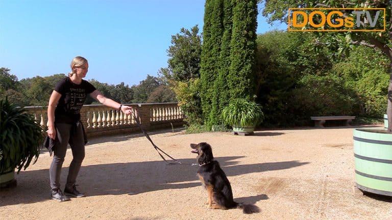 kommando bleib hund schritte entfernen