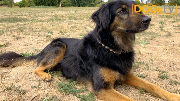 Kommando Platz Hund entspannt
