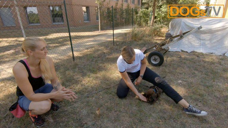 Kommando Platz Hund angewinkeltes Bein Belohnung