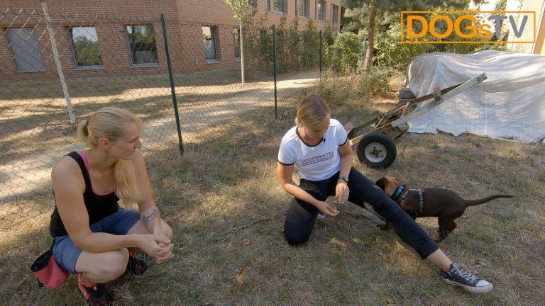 Kommando Platz Hund angewinkeltes Bein