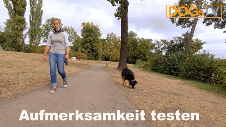 platz-auf-distanz-ablenkung-hund-dogstv