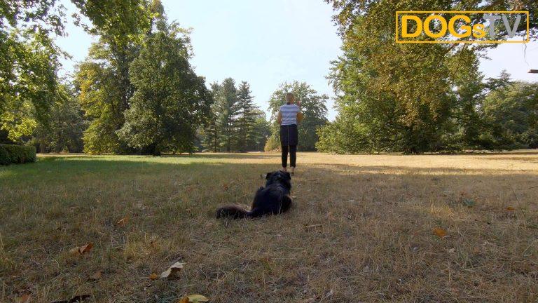 platz-auf-distanz-hund-ablegen-dogstv