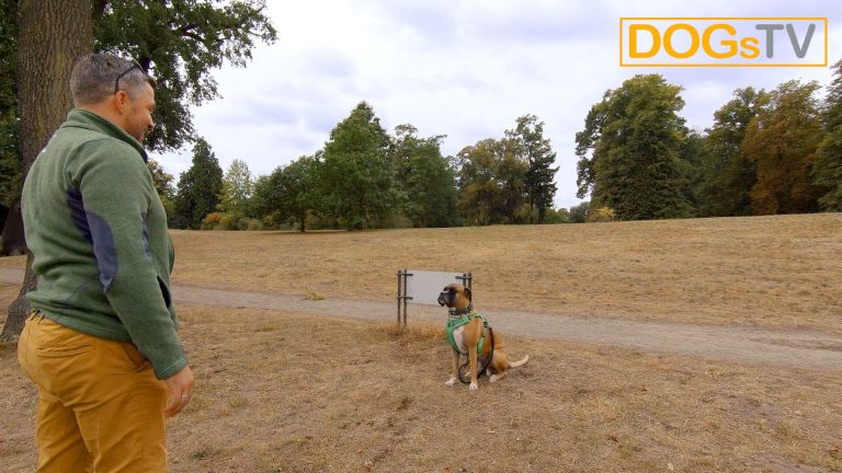 platz-auf-distanz-hund-an-leine-dogstv
