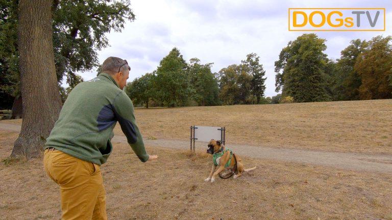 Kommando Platz Hund angespannt