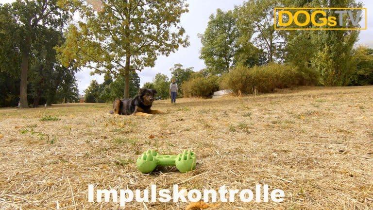 platz-auf-distanz-impulskontrolle-dogstv