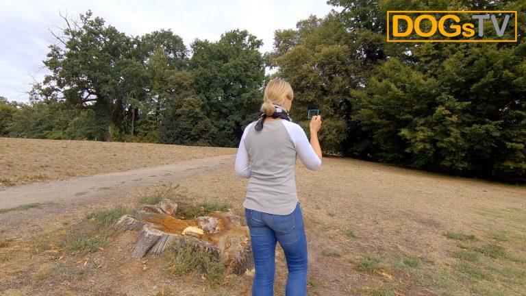 platz-auf-distanz-stopsignal-taschenspiegel-dogstv