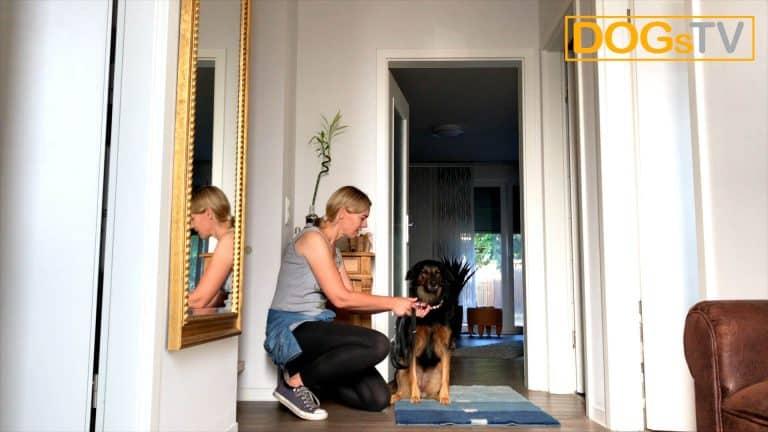 Sitz ohne Futter, Hund anleinen