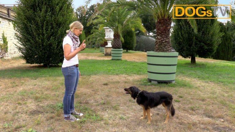 sitz ohne futter hund ignoriert kommando