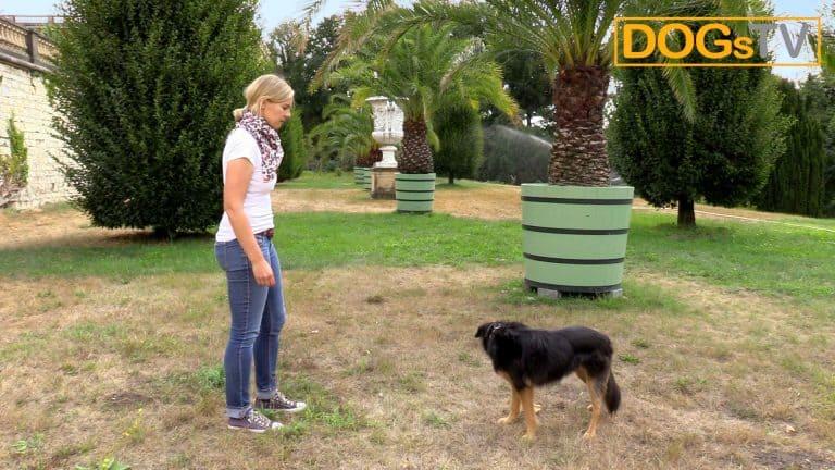 Sitz ohne Futter, Hund ignoriert Kommando