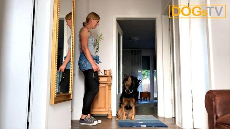 Sitz ohne Futter, Hund setzt sich