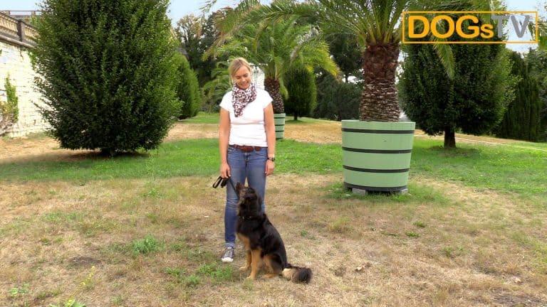 sitz ohne futter leinensignal hund sitzt