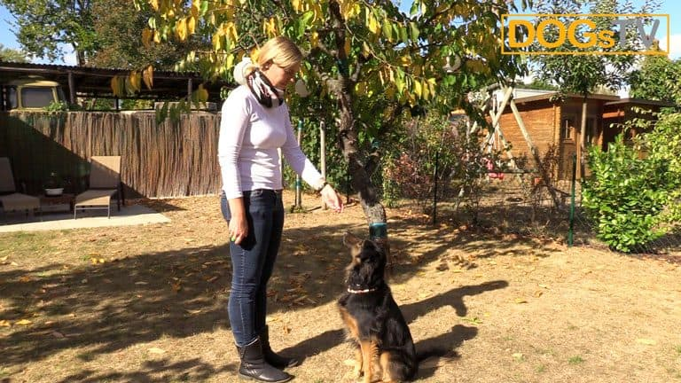 clickertraining-clicker-konditionieren-belohnung-dogstv