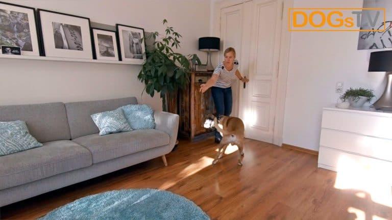 hund bellt wenn es klingelt futter werfen dogstv