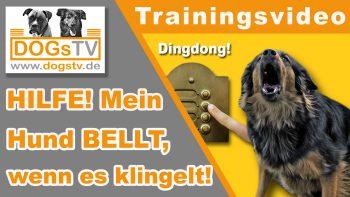 Hund bellt, wenn es klingelt / So entspannt dein Hund bei Besuch