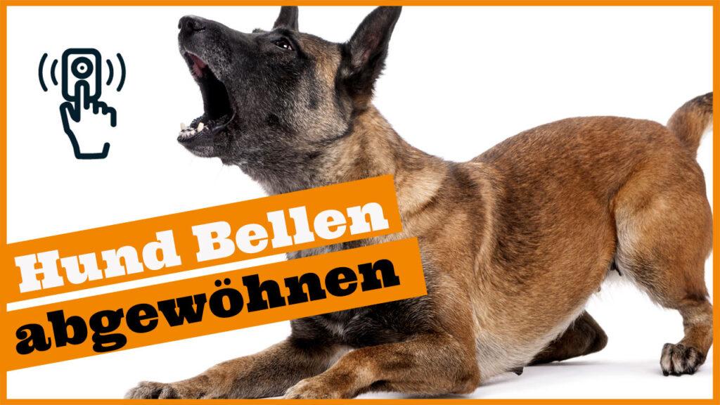 hund bellt wenn es klingelt dogstv