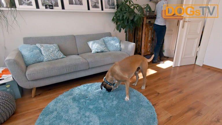 hund bellt wenn es klingelt hund frisst dogstv