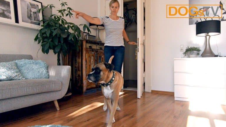 hund bellt wenn es klingelt hund wegschicken dogstv