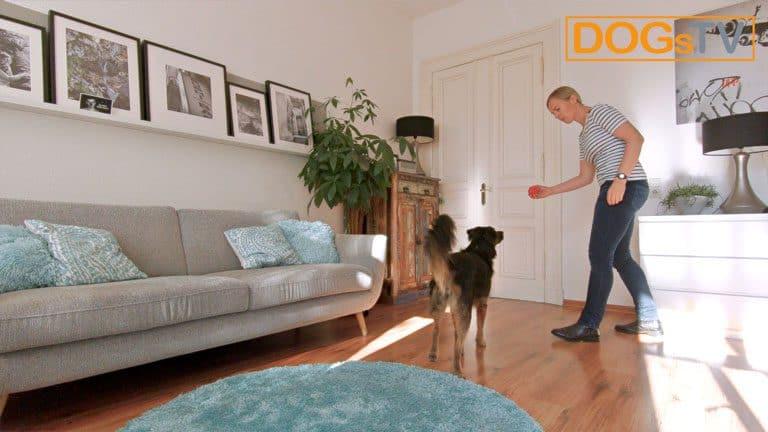 hund bellt wenn es klingelt kong nehmen dogstv