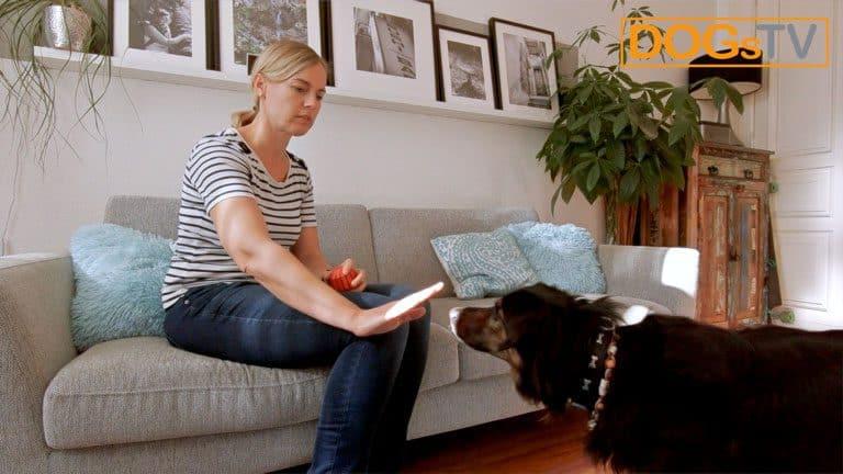 hund bellt wenn es klingelt kong tabuisieren dogstv
