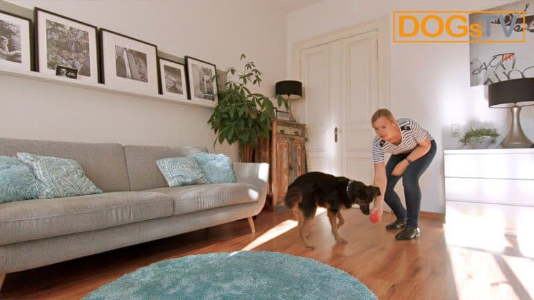 hund bellt wenn es klingelt kong werfen dogstv