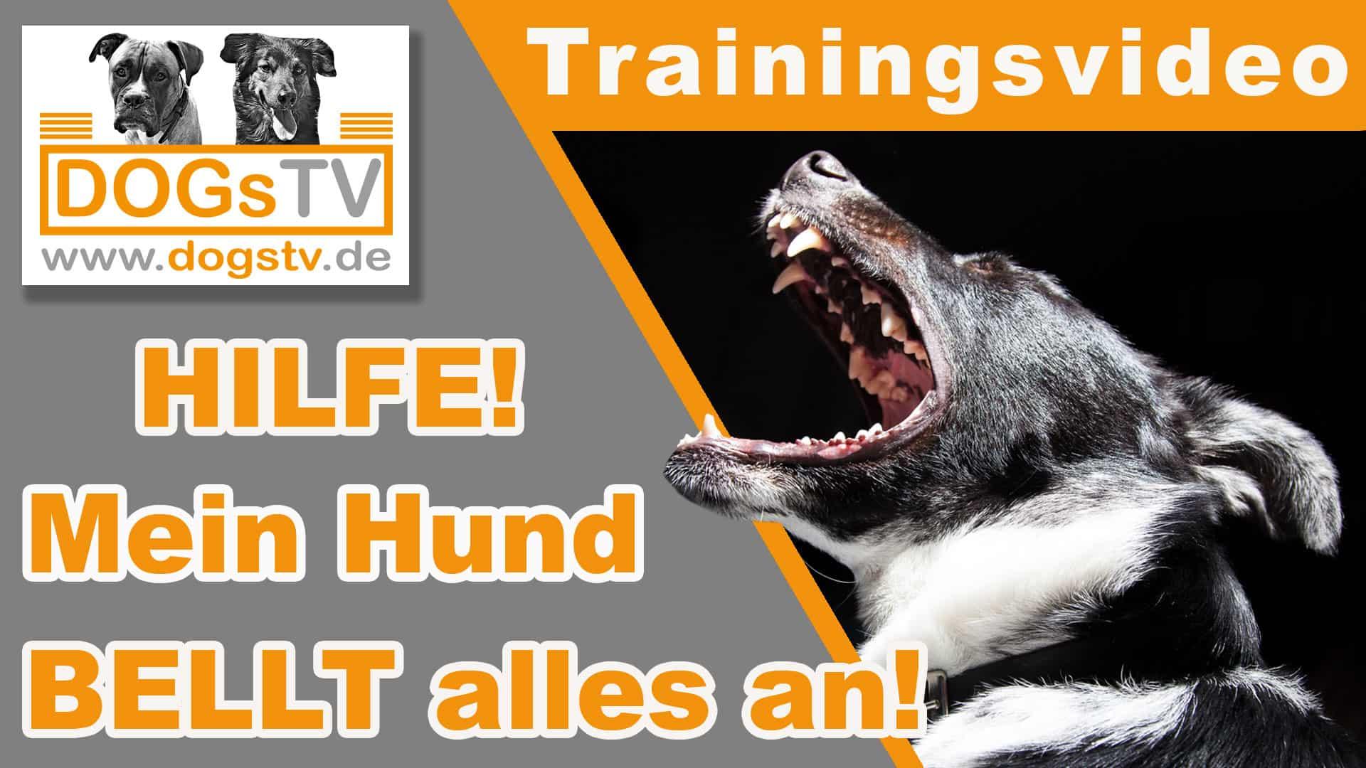 leinenaggression-hund-bellt-alles-an-dogstv