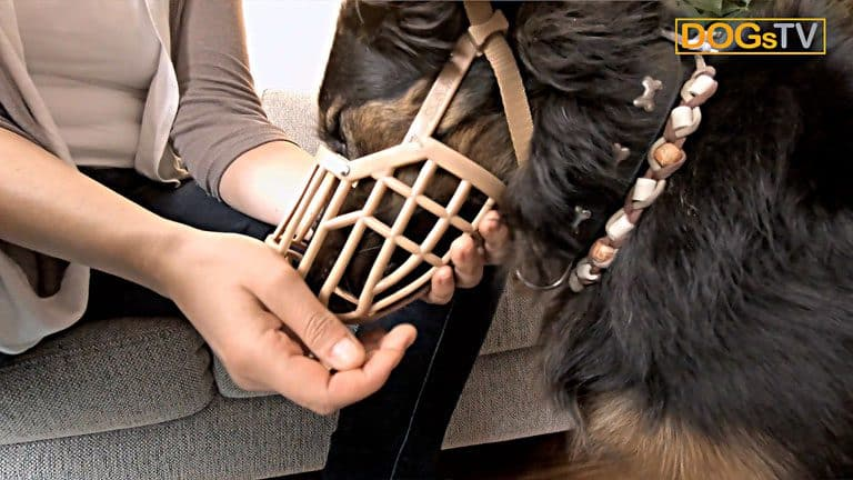 maulkorbtraining hund frisst aus maulkorb dogstv