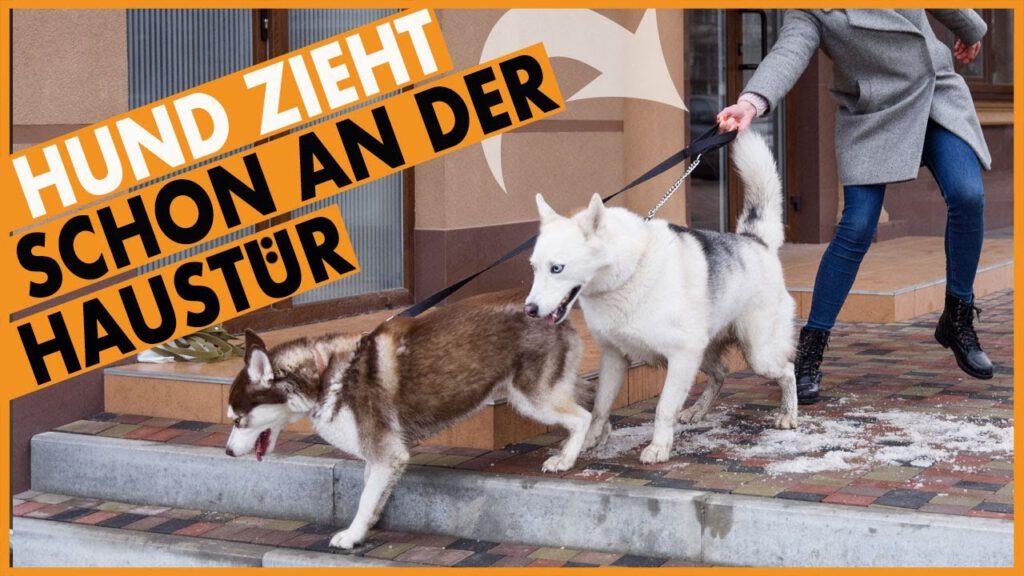 hund zieht schon an der tuer dogstv