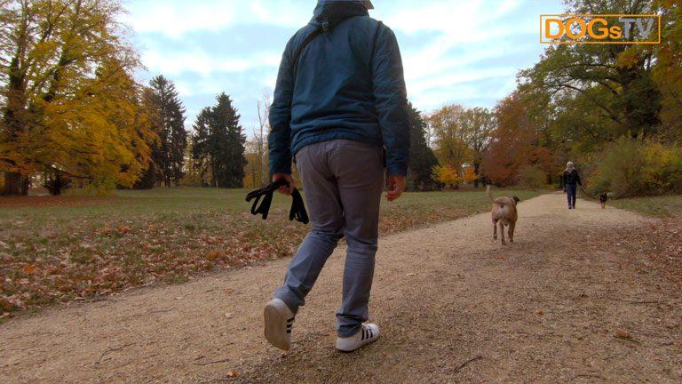 hund anspringen abgewoehnen hund rennt zu fremden dogstv