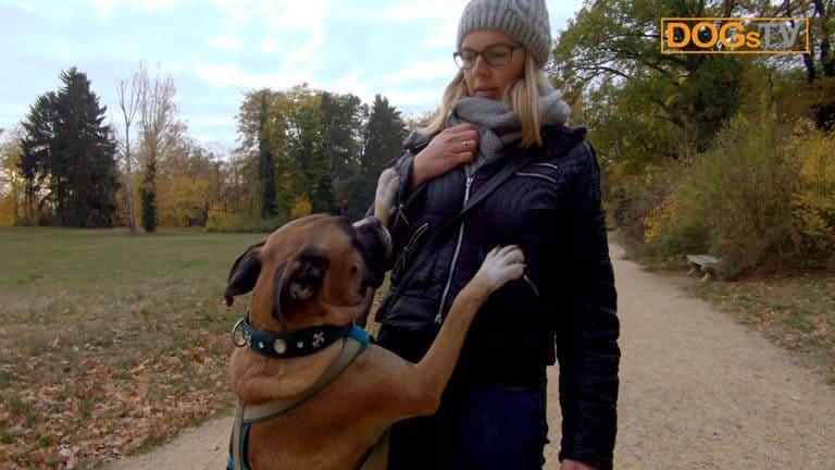 hund anspringen abgewoehnen hund springt an dogstv