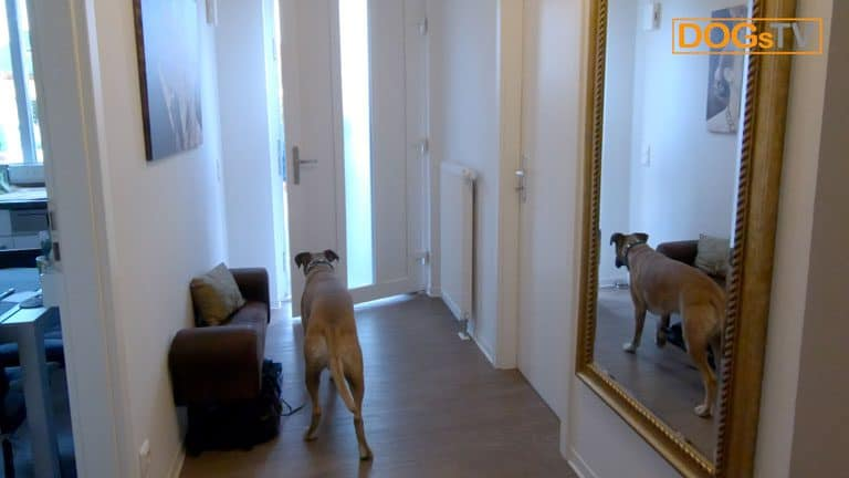 hund anspringen abgewoehnen hund wartet dogstv