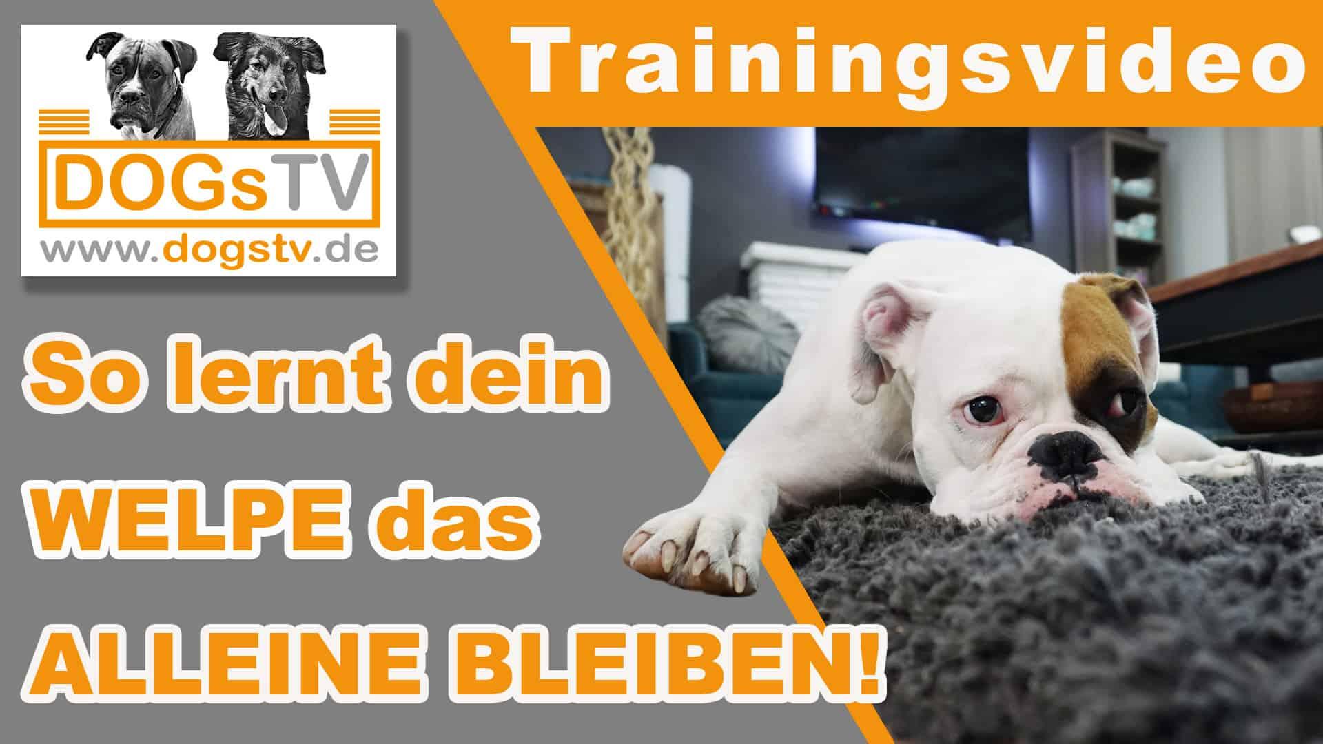 alleinbleiben hund trainieren dogstv