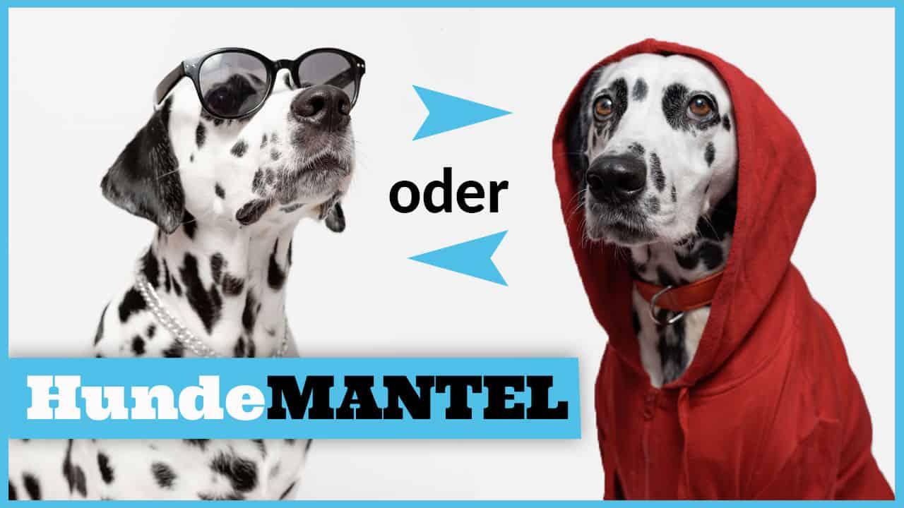 wintermantel für hunde hundemantel dogstv