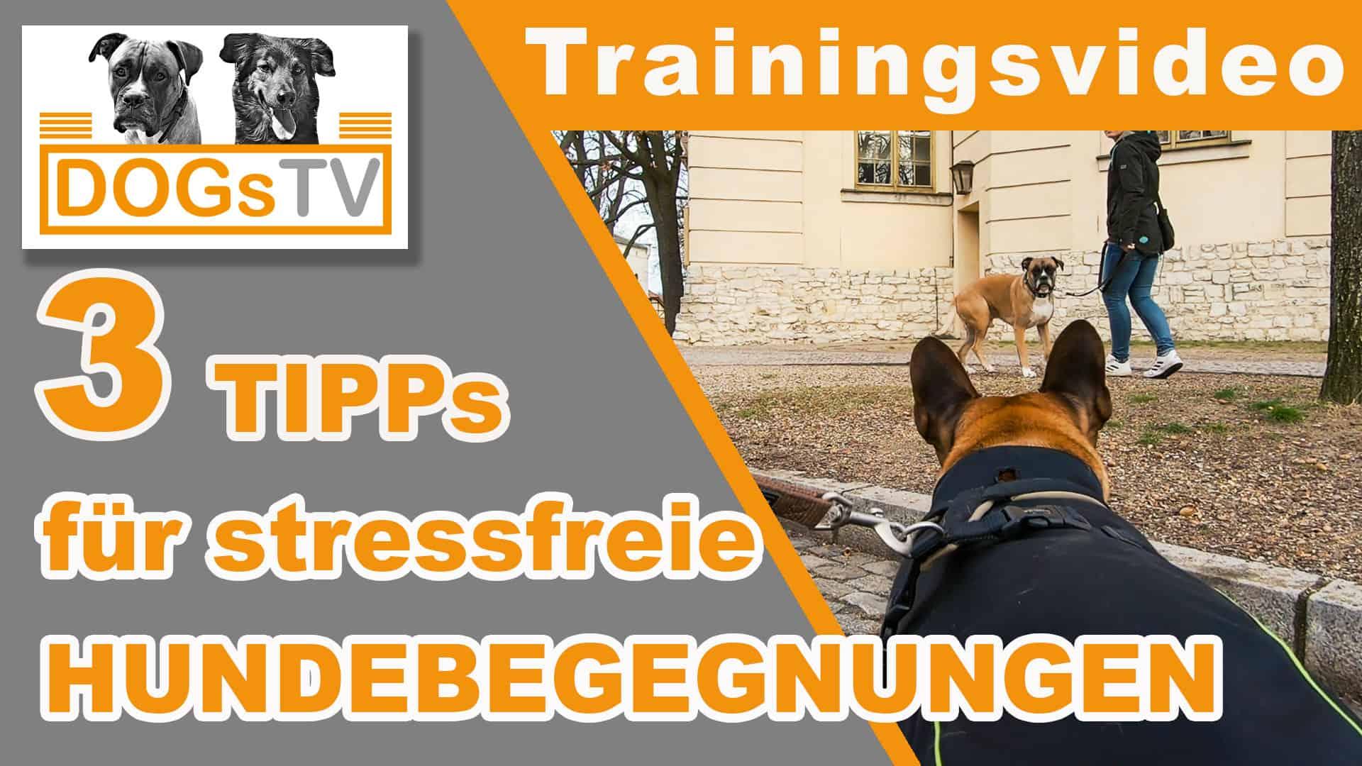 hundebegegnungen an der leine stressfrei an hunden vorbei dogstv