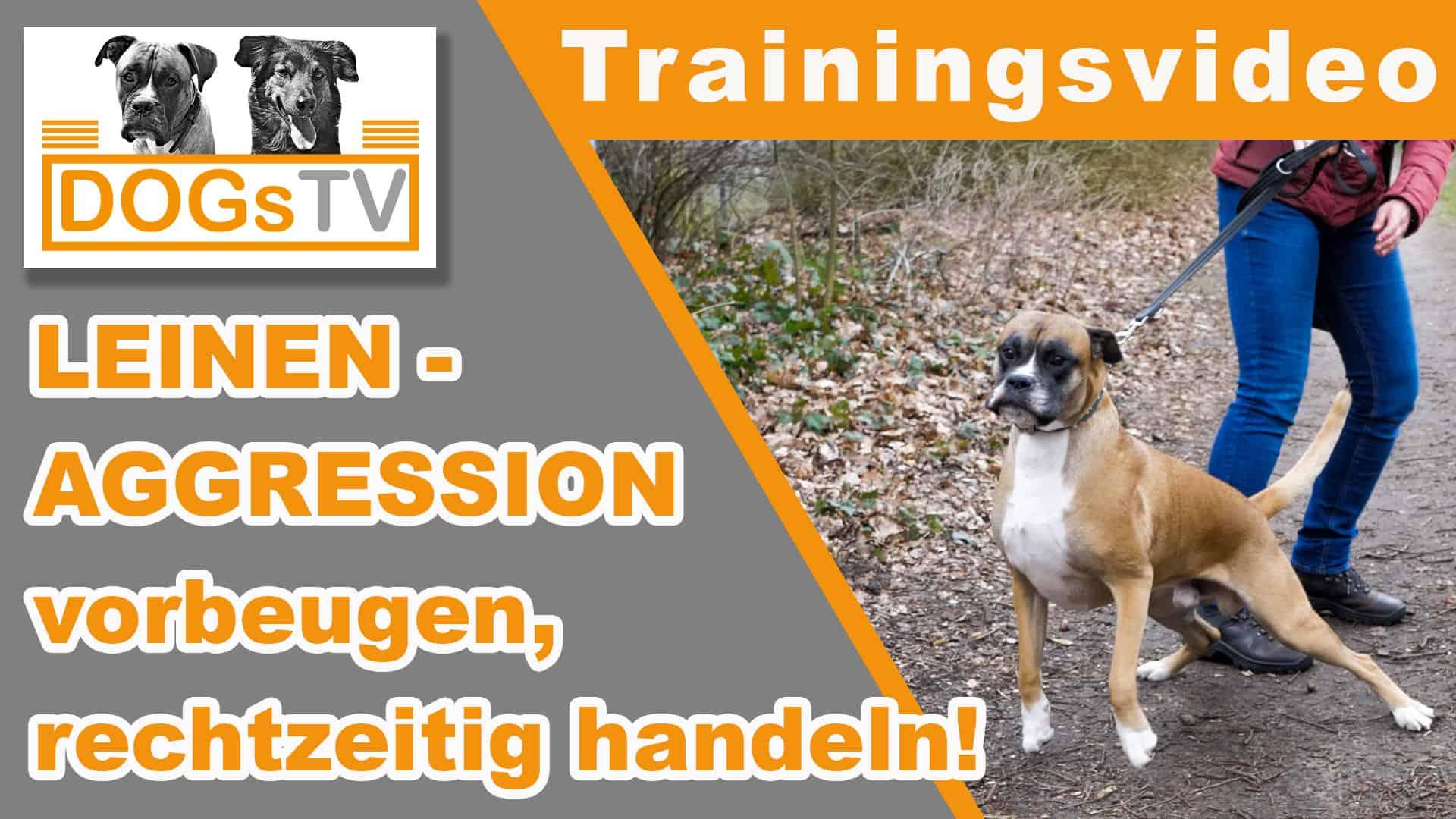 leinenaggression hund dogstv