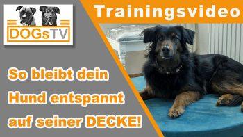 Hund Decke beibringen – So bleibt dein Hund auf seiner Decke!