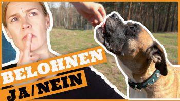 Belohnung Hund – Wichtige Tipps für die Hundeerziehung