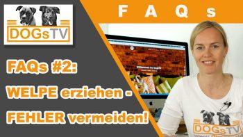 Welpenerziehung – Fehler vermeiden / DogsTV FAQs #2