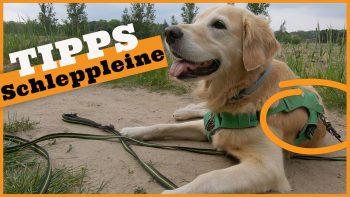 Schleppleine – Nutzung der Schleppleine in der Praxis – 5 Tipps