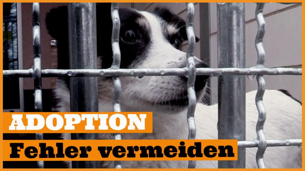 hund aus tierheim adoptieren dogstv