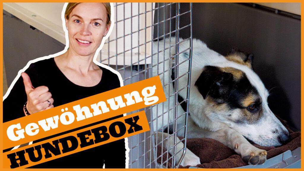 hund an hundebox gewoehnen dogstv