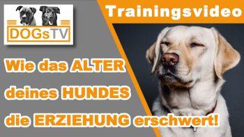 Entwicklungsphasen des Hundes in der Hundeerziehung